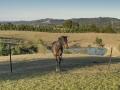 260 Montpelier Dr Horse